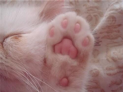 kitten-paw